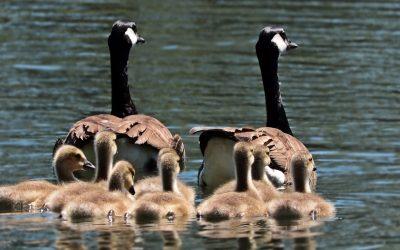 Family – Stewards of God's Property