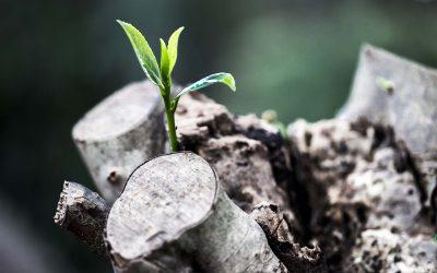 Seeking Revival